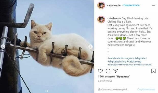 Кот на фото.