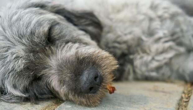 Около 180 млн рублей потратят в Подмосковье на бездомных животных в 2020 г