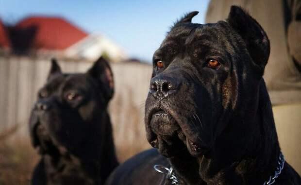 В Мирнограде мужчину загрызли собаки