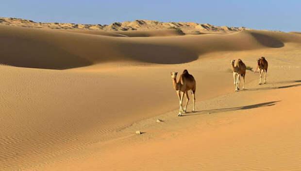 Учёные раскрыли, почему Сахара превратилась в пустыню