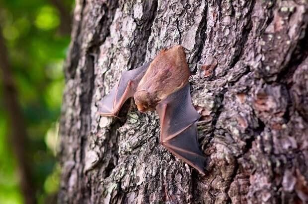 Редких летучих мышей заметили в парке «Кузьминки–Люблино»