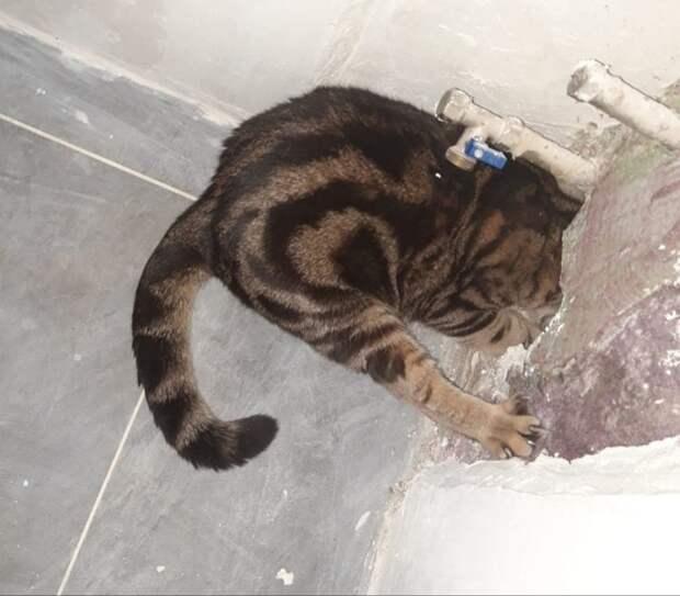 Спасателям в Глазове пришлось освобождать застрявшего в стене кота