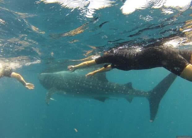 10 невероятных мифов о животных