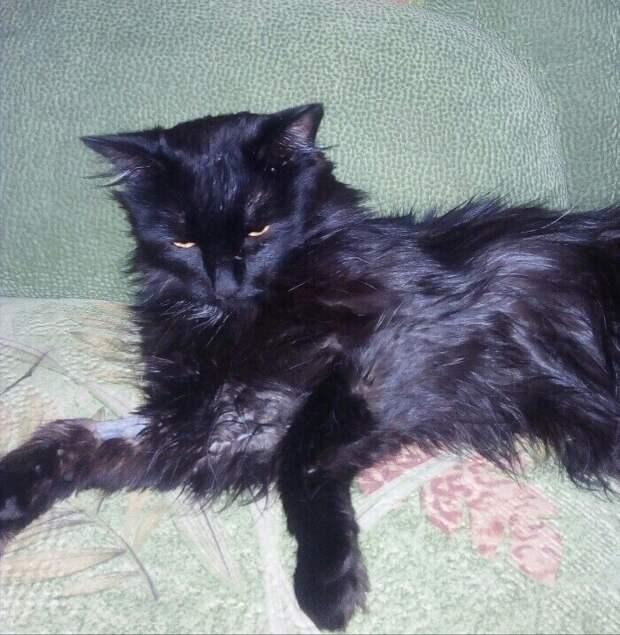 На остановке сидел печальный измученный кот. Он болел, а на улице с каждым днем становилось холоднее