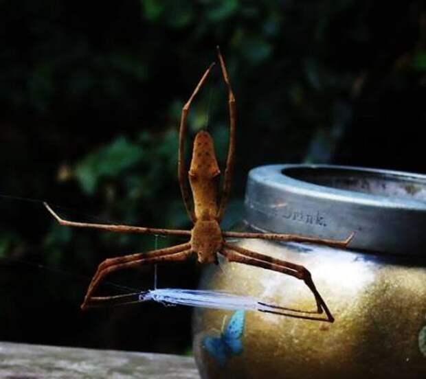 Способности пауков