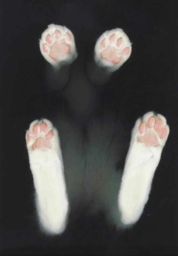 Ммм, арт-подход котики, коты, милота, мотики, сквозь стекло