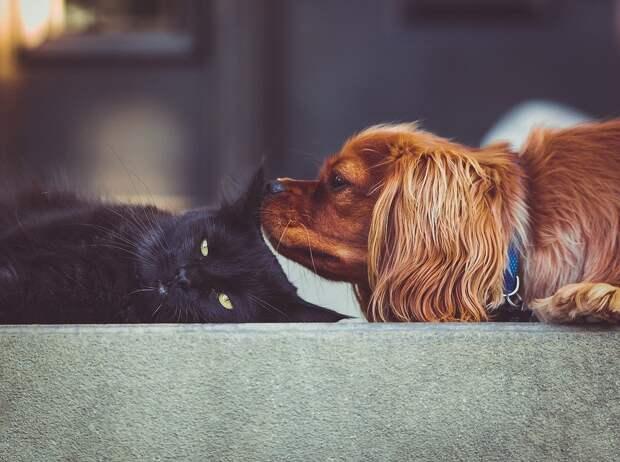 В Удмуртии разработают правила содержания домашних животных в квартирах