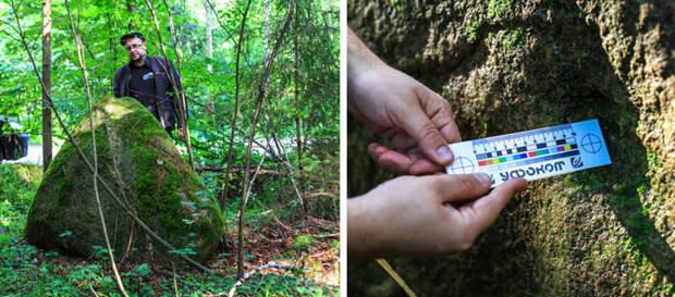 В поисках огромной ящерицы, которую видели в лесах Белоруссии