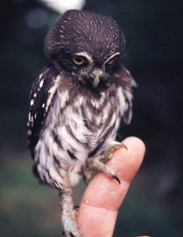 Душевные снимки животных