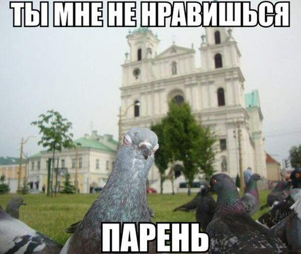 1453387456_memy-s-zhivotnymi-4