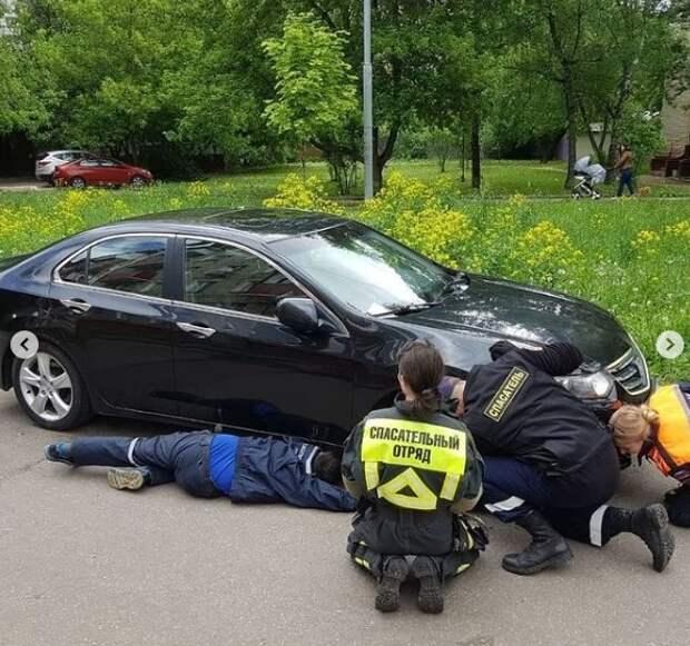 В Малом Коптевском проезде спасли застрявшего под капотом машины котенка