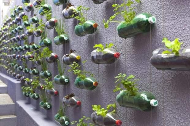 Вторая жизнь пластиковой бутылки: что можно смастерить