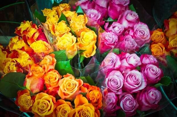 В салонах много роз и других ярких оттенков, которые не нужно красить.