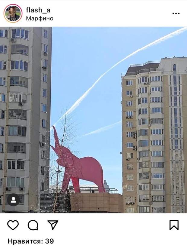 Фото дня: в кадр попал розовый слон из Марфина