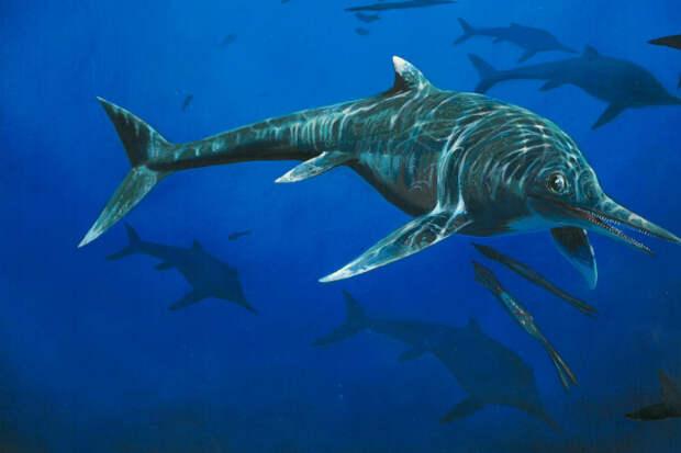 Годзилла из глубины веков: археологи нашли следы животного невероятных размеров