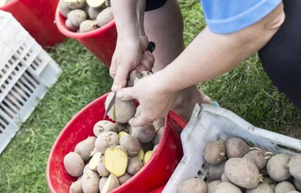 Разрезание картофеля