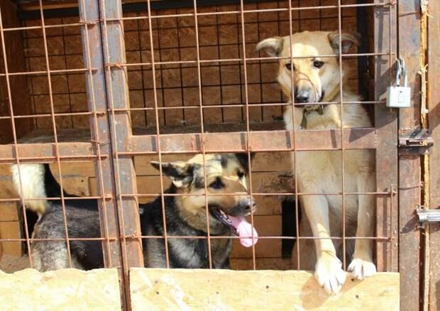 Девушка приезжала кормить уличного пса, но однажды его внешний вид напугал ее волонтер, овчарка, пес, приют, собака, улица