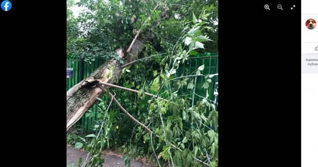 Упавшее дерево повредило забор детского сада на Сторожевой