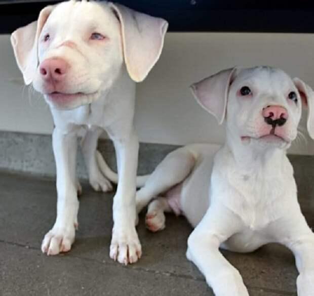 «Им нельзя разлучаться!»: слепой и глухой щенок может рассчитывать только на поддержку братишки