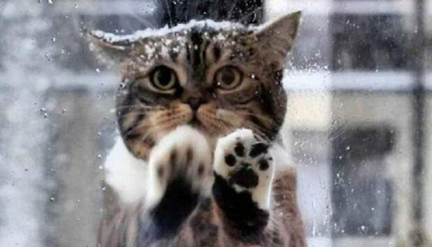 Кошка пришла к кафе, стала царапать окна и мяукать — так она позвала людей на помощь