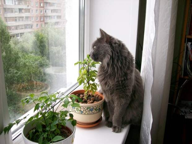 Кошки оставляют следы своих лапок в наших сердцах