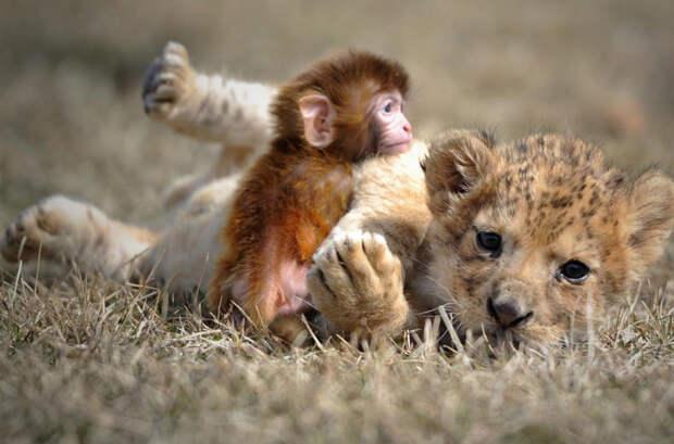 Дружба среди животных есть! дружба, животные