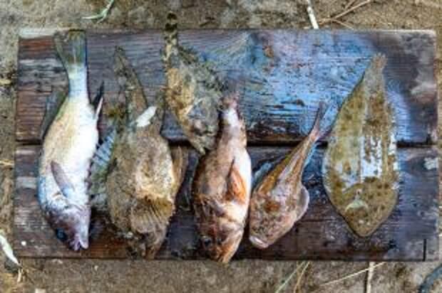 Сезон селедки и барабульки. Какую рыбу стоит пробовать в Крыму