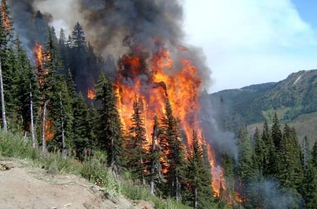 С какой скоростью должны гореть леса, чтобы их число начало сокращаться