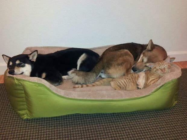 29. Очаровательное трио животные, жизнь, кот, питомец, семья, собака, фото