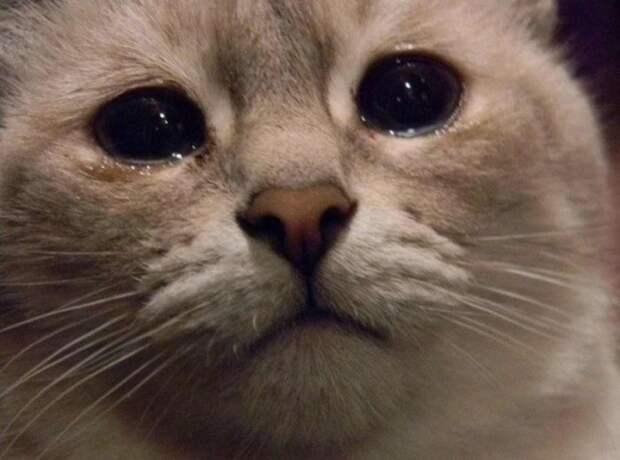 Могут ли животные плакать