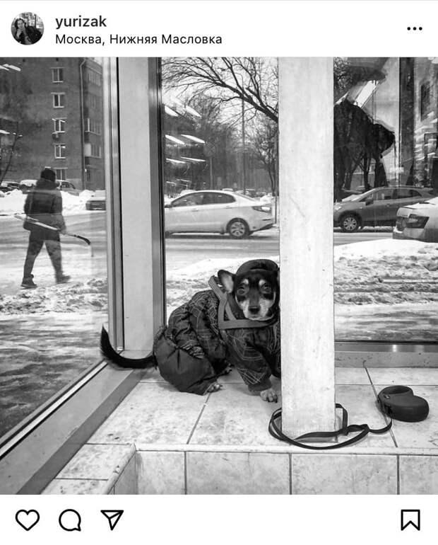 Фото дня: в ожидании хозяина на Нижней Масловке