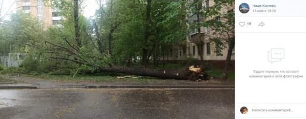 На Большой Академической сильный ветер повалил дерево