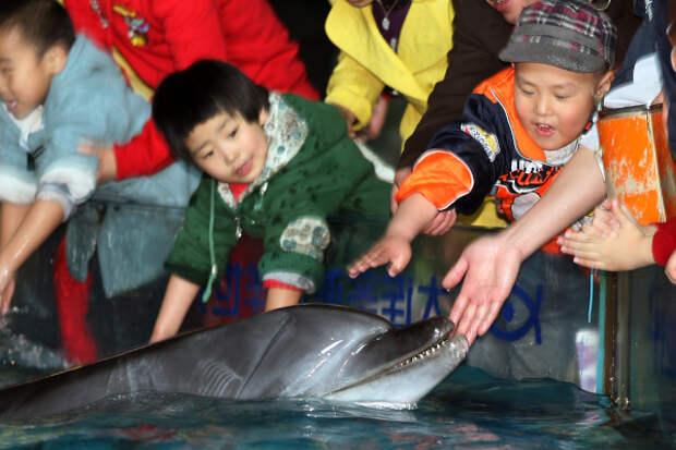 Дельфины спасут от депрессии