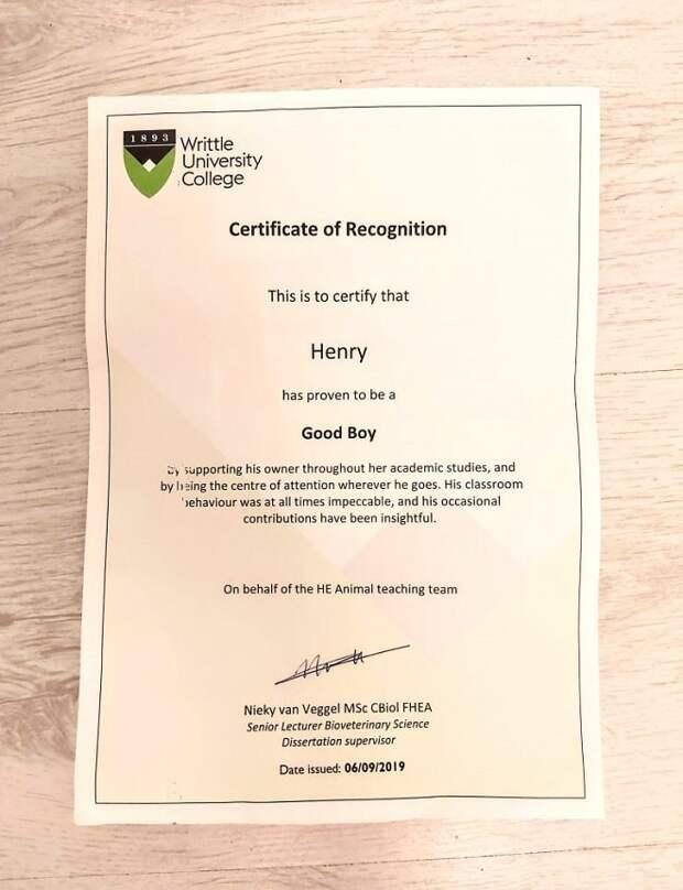 Сертификат колледжа