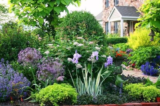 Сочетание различных видов садовых цветов украсит дачный участок
