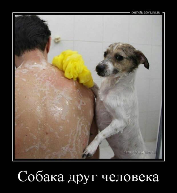 5402287_demotivatorium_ru_sobaka_drug_cheloveka_124912 (600x652, 103Kb)