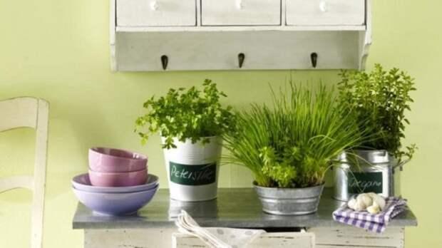 Домашние растение на кухне