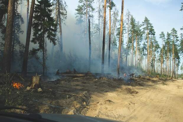 Поезда в Нижегородской области отменили из-за лесного пожара
