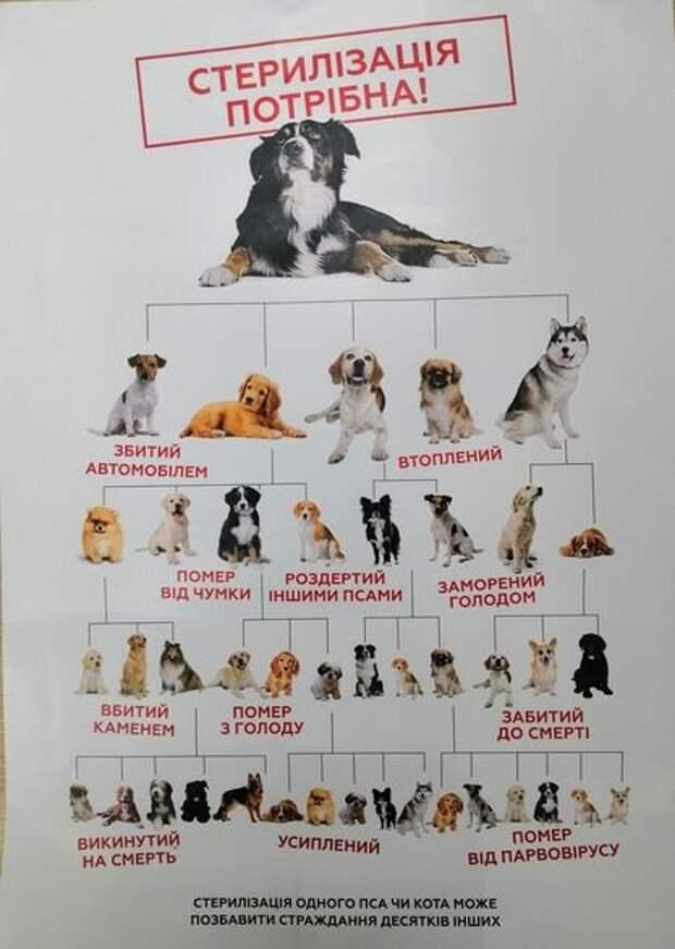 """Плакат  благотворительной организации """"Дім Сірка"""" о том, почему стерилизовать  домашних животных необходимо (на примере собачек , но все же)."""