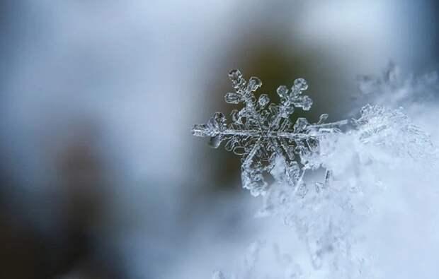 Вильфанд объяснил аномальное потепление в Центральной России