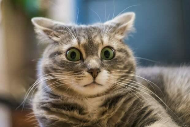 Ученые выяснили, как подружиться с кошкой
