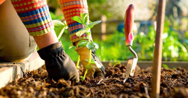 Последний месяц зимы - старт для огородников