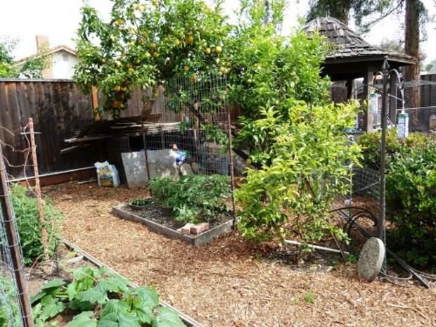 Украшение садового участка своими руками - оформление дачи своими руками (2)