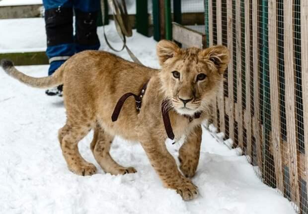 Любой нуждающийся сможет получить своевременную консультацию по диким животным