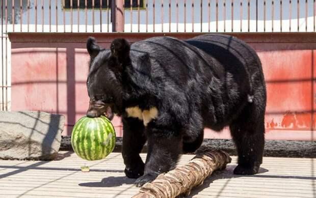 Посетители барнаульского зоопарка закормили животных до смерти