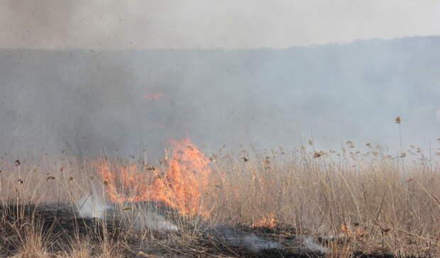 Прокуратура Башкирии обнаружила нарушения в центре тушения лесных пожаров