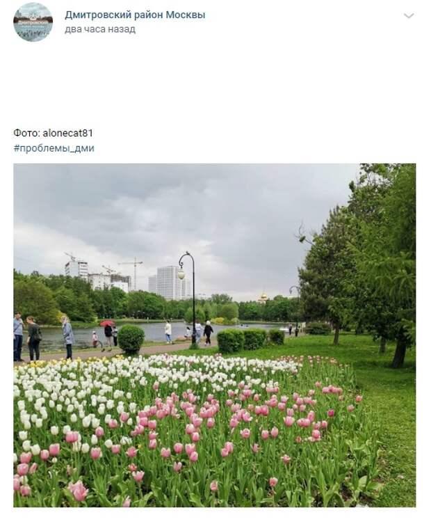 Фото дня: красочные тюльпаны в парке «Ангарские пруды»