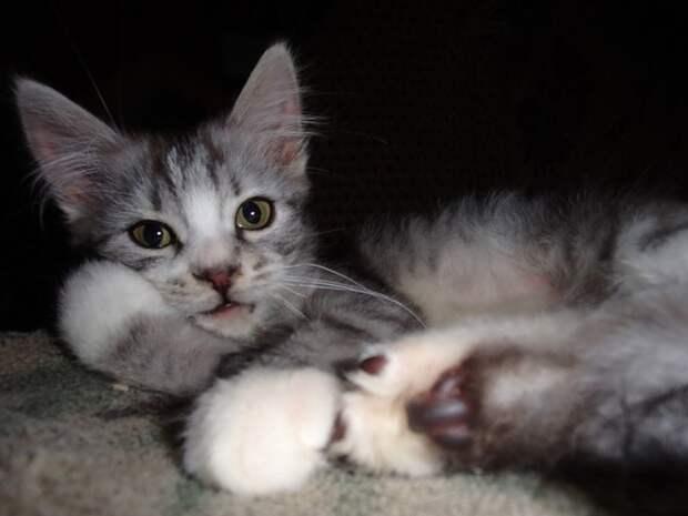 Больной котенок жалобным взглядом провожал покидавших его хозяев