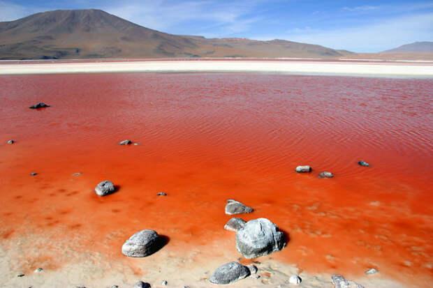 Лагуна Колорада, минеральное озеро в Боливии красота, путешествия, фото