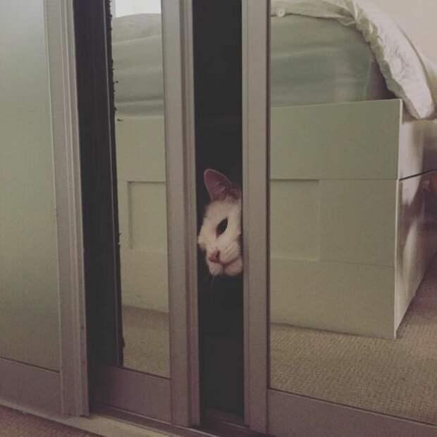2. Восклицают: «Посмотриииииите на него!» — когда кот делает что-то милое домашний питомец, животные, кот, кошка, привычки, прикол, юмор